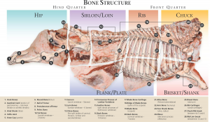 Beef_BoneStructureDiagram
